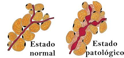 Estado normal y patológico